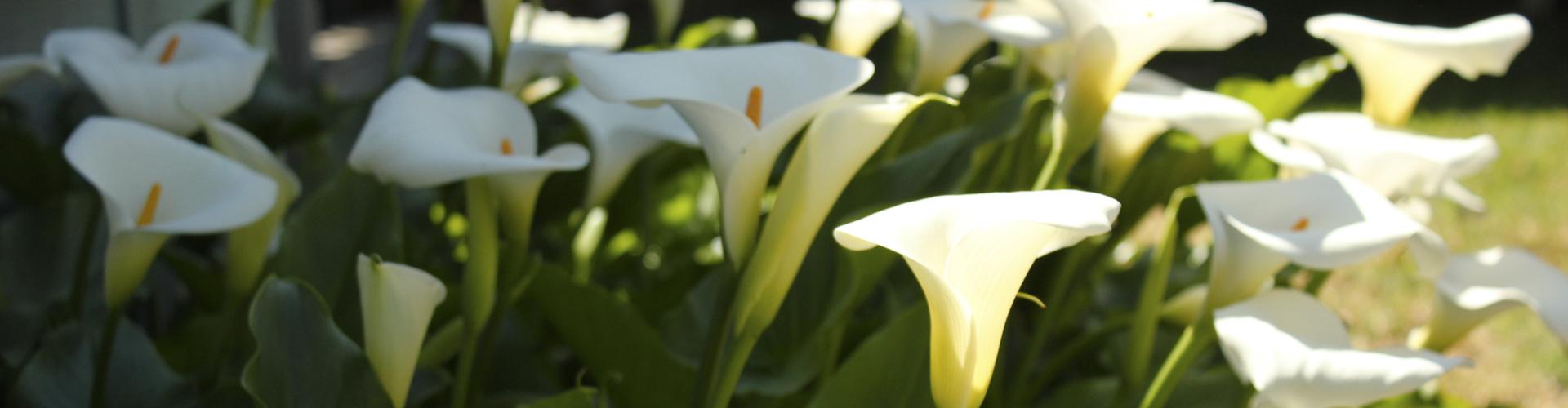 kwiaty4